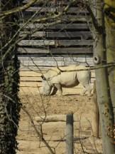 Zoo de Vincennes (100)