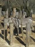 Zoo de Vincennes (104)