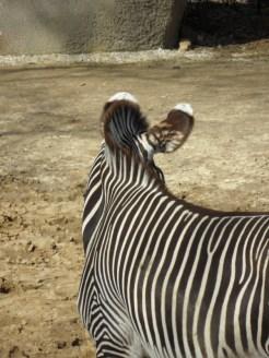 Zoo de Vincennes (106)