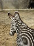 Zoo de Vincennes (108)