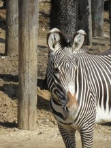 Zoo de Vincennes (111)