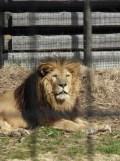 Zoo de Vincennes (122)