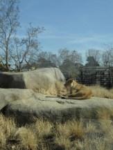 Zoo de Vincennes (125)
