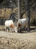 Zoo de Vincennes (140)