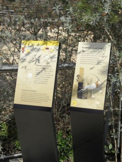 Zoo de Vincennes (144)