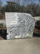 Zoo de Vincennes (165)