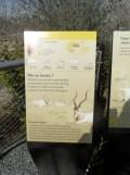 Zoo de Vincennes (166)