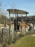 Zoo de Vincennes (172)