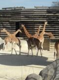 Zoo de Vincennes (192)