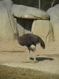 Zoo de Vincennes (206)
