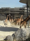 Zoo de Vincennes (213)