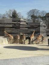 Zoo de Vincennes (216)
