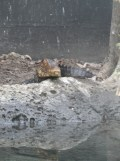 Zoo de Vincennes (263)