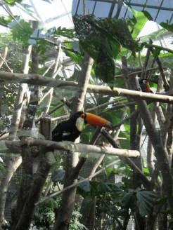 Zoo de Vincennes (288)