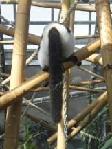 Zoo de Vincennes (294)