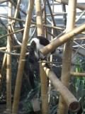 Zoo de Vincennes (297)