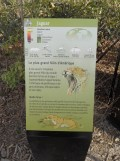 Zoo de Vincennes (316)
