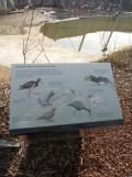 Zoo de Vincennes (329)