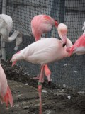 Zoo de Vincennes (336)