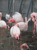 Zoo de Vincennes (343)