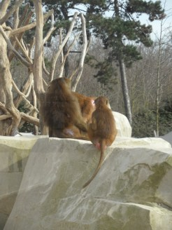 Zoo de Vincennes (353)
