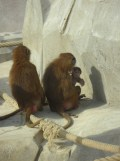 Zoo de Vincennes (362)