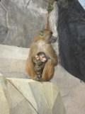 Zoo de Vincennes (370)