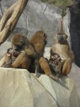 Zoo de Vincennes (371)