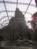 Zoo de Vincennes (395)