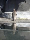 Zoo de Vincennes (52)