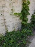 2.Jardin des Rosiers (17)