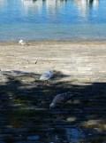 De Belle Île à Vannes en bateau ! (7)
