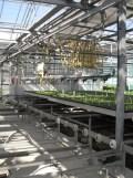 Centre Horticole de Paris (68)