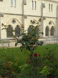 Musée Rodin (11)