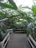 Jardin des serres d'Auteuil (100)