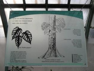 Jardin des serres d'Auteuil (128)