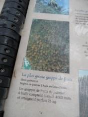 Jardin des serres d'Auteuil (75)