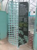 Jardin des serres d'Auteuil (28)