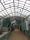 Jardin des serres d'Auteuil (50)