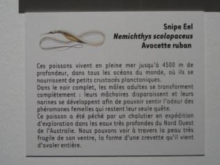 Musée d'histoire naturelle de Nantes (50)