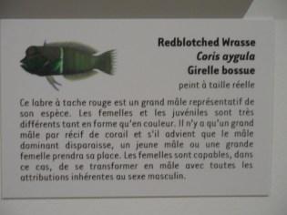 Musée d'histoire naturelle de Nantes (59)