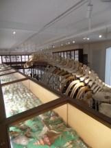 Musée d'histoire naturelle de Nantes (72)