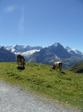 grindelwald-first-133