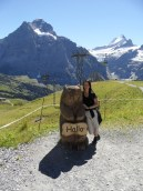 grindelwald-first-79