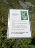 wilderswil-schynige-platte-187