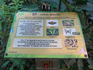 la-serre-aux-papillons-59