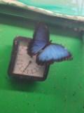 la-serre-aux-papillons-102