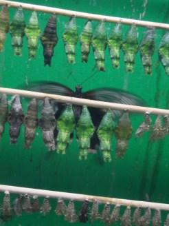la-serre-aux-papillons-104