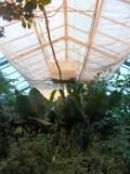la-serre-aux-papillons-107