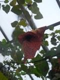 la-serre-aux-papillons-15